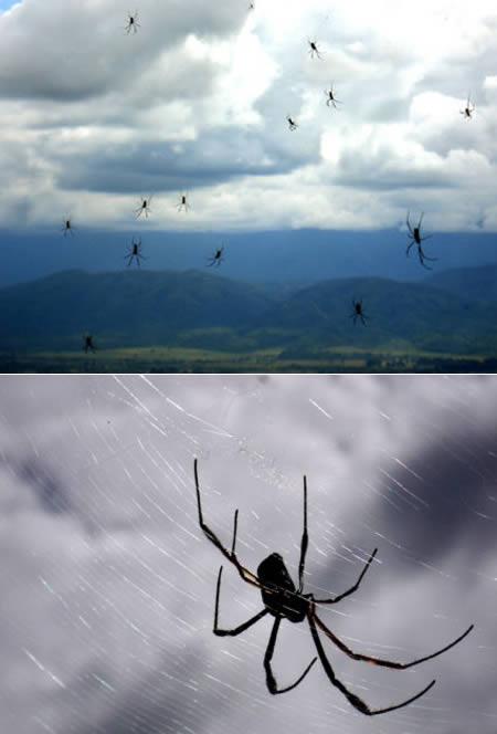 Pókeső